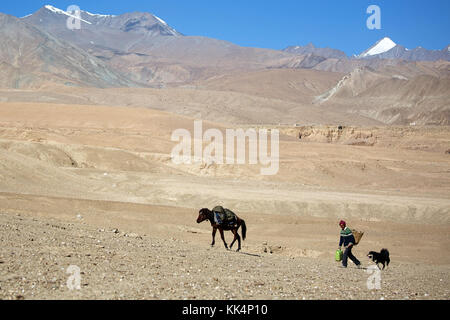 Local man with a dog and a mule - traditional way of transport, Ladakh, Jammu and Kashmir, India. - Stock Photo