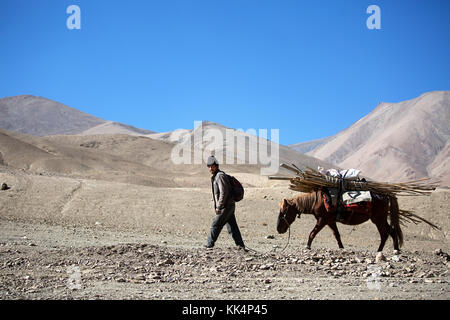 Local man with a mule - traditional way of transport, Ladakh, Jammu and Kashmir, India. - Stock Photo