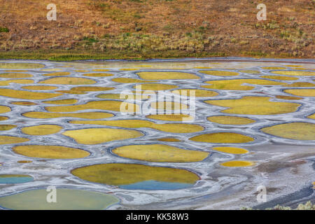 Spotted Lake in British Columbia, Canada - Stock Photo