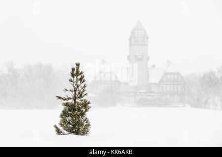 Lone Pine tree in snowstorm, Assiniboine Park, Winnipeg, Manitoba, Canada. - Stock Photo