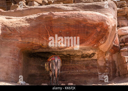 Donkey resting in the shade of pink sandstone carved Nabataean Tomb, Petra, Jordan, Middle East - Stock Photo