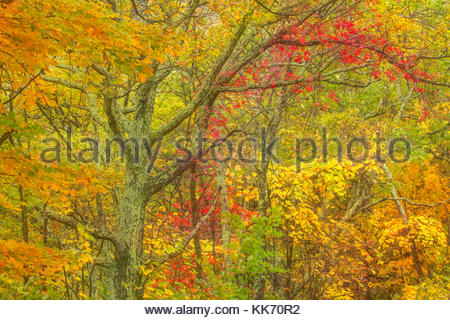 Trees in the Monongahela National Forest near Maysville, West Virginia, display the full spectrum of autumn colors - Stock Photo
