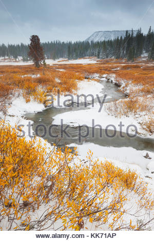 Golden fall color lines the snow-covered banks of Blackrock Creek after the first autumn snowfall in Teton County, - Stock Photo