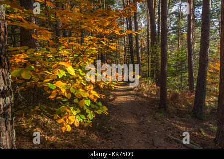 sunbeams on colourful autumn leaves at a forest path, Mont Sainte-Odile, in German Odilienberg, peak in the Vosges - Stock Photo