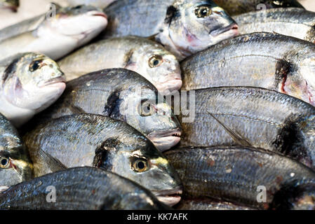 Rows of fresh sea bream on display at a farmer fishmongers stall in Essex England - Stock Photo