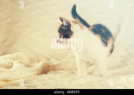 Horizontal photo of nice colorful few weeks old kitten. Cat has white, tabby and red color. Animal is standing on - Stock Photo