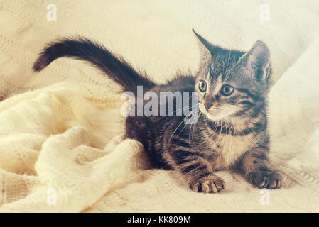 Horizontal photo of nice colorful striped few weeks old kitten. Cat has white and tabby color. Animal is standing - Stock Photo
