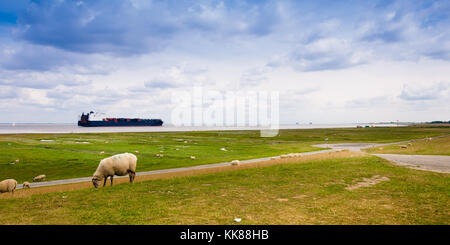 A container ship on the river Elbe is passing sheeps on a dike near Cuxhaven - Stock Photo
