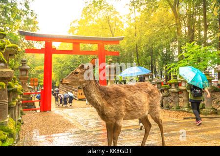 Nara deer at sunset - Stock Photo