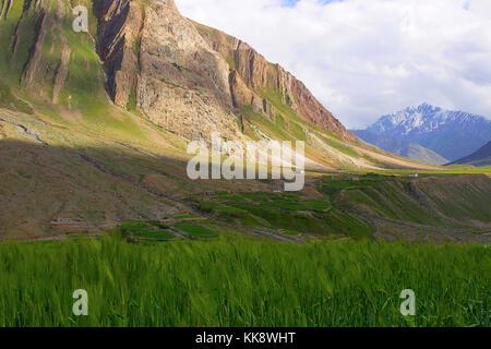 Crop field view near mountains. Himachal Pradesh, Northern India - Stock Photo