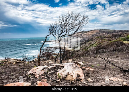 Tremendous Robbberg nature reserve coastline at Plettenberg bay South Africa with burned tree in the foreground - Stock Photo