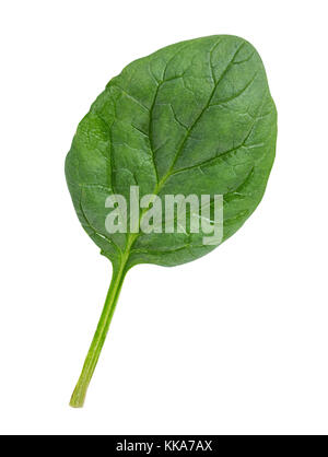 Spinach Isolated on a white background - Stock Photo