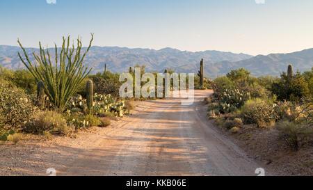 Road through countryside with various cacti (Cactus), Saguaro National Park, Tucson, Arizona, USA - Stock Photo
