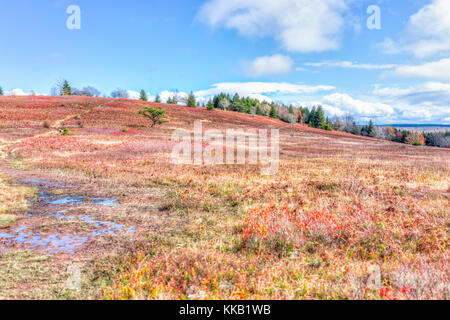 Autumn lush foliage landscape with one single tree with colorful open vast meadow, wet muddy trail path dirt road - Stock Photo