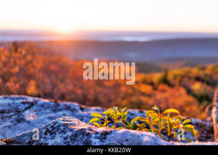 Morning dark sunrise with sky and golden yellow orange autumn foliage in Dolly Sods, Bear Rocks, West Virginia with - Stock Photo