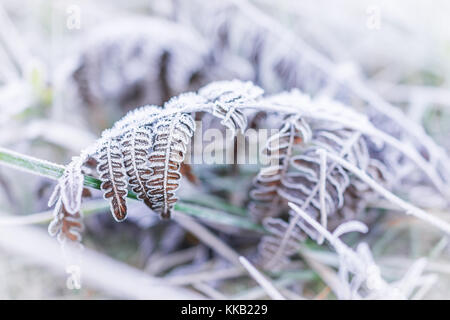 Macro closeup of frost ice crystals on brown fern branch leaves plant in morning snow - Stock Photo