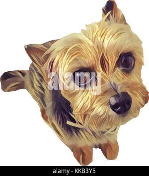 YORKSHIRE DOG STANDING WHITE BACKGROUND - Stock Photo