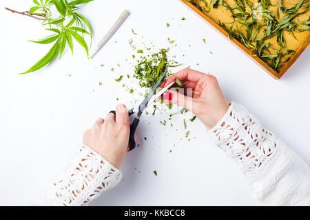 Girl cutting marijuana leafs top view first person - Stock Photo