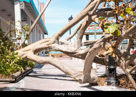 Debris and a damaged tree in the aftermath of Hurricane Irma September 15, 2017 in Key West, Florida.  (photo by - Stock Photo