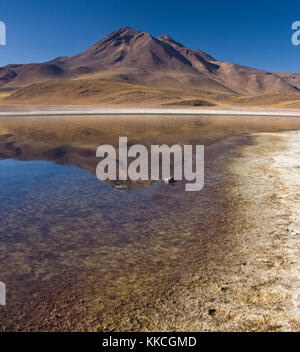 Altiplanic Lagoon in the high Andes Mountains in the Atacama Desert in northern Chile - Stock Photo