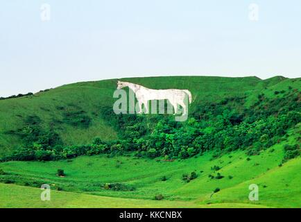 Westbury White Horse chalk hill figure below Bratton Camp Iron Age hill fort on the edge of Bratton Downs, Wiltshire, - Stock Photo