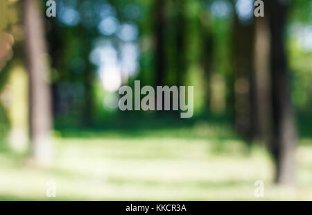 Abstract natural background. Blur, blur, bokeh. Forest. Trunks of trees and green leaves. Summer time. Sunny day. - Stock Photo