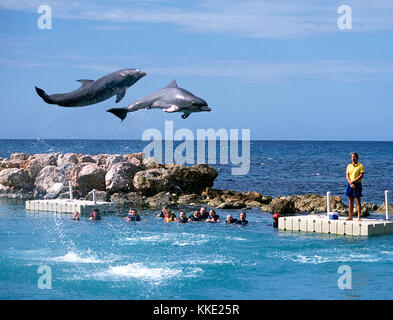 Swimming with Dolphins at Ocho Rios in Jamaica - Stock Photo