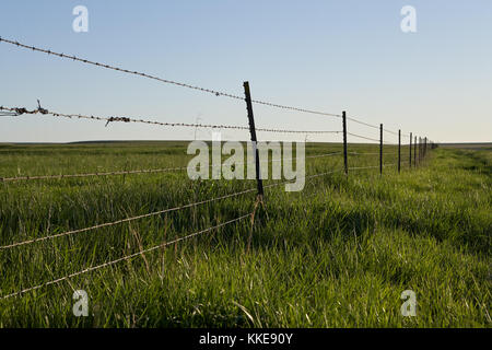 Rustic barbed wire fence around agricultural land with strands of hair from cattle caught in the sharp barbs in - Stock Photo