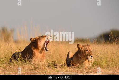 Wildlife on Chobe River, Botswana - Stock Photo