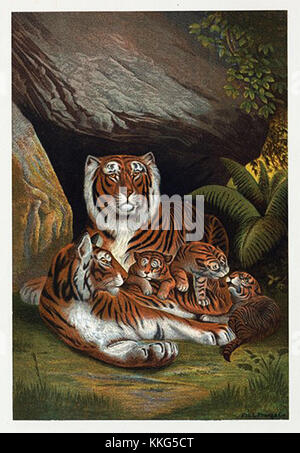 A tiger family snuggled up in their cave - Stock Photo
