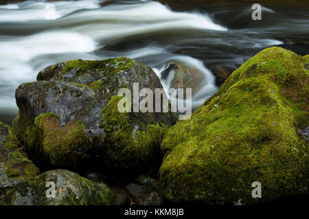 Stream course of the Schwarzer Regen, Bavarian Forest, Bavaria, Germany, - Stock Photo