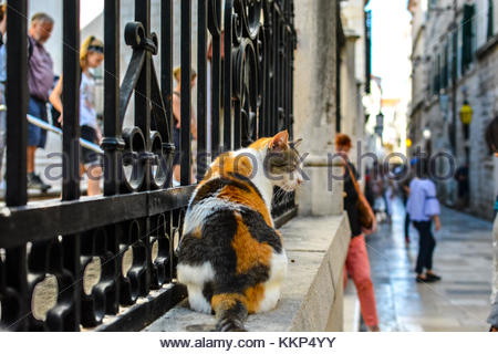 A beautiful stray calico cat sits on a wall in the Croatian city of Dubrovnik as tourists and locals walk past on - Stock Photo