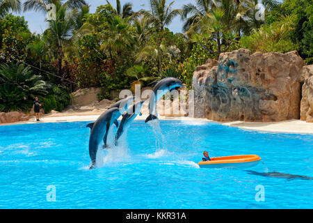 Dolphin show in the dolphinarium of the Loro Parque in Puerto de la Cruz, Tenerife, Canary Islands, Spain - Stock Photo