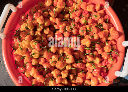 Tiny sized aji dulce small red peppers for sale at the Union Square Green Market in Manhattan, New York City. - Stock Photo