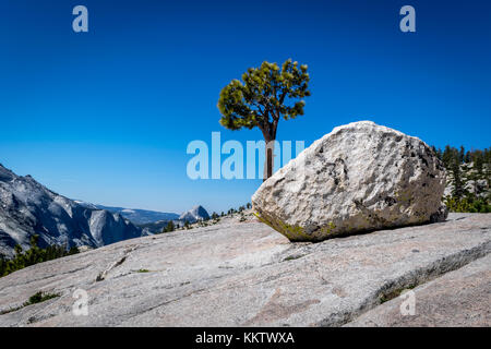 Half Dome and a. Lone Tree as seen from Olmsted Point just off of Tioga Pass Road, Yosemite National Park - June - Stock Photo