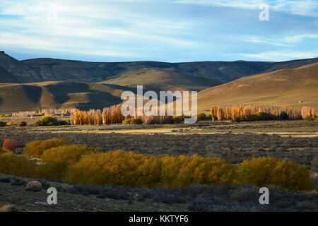 Autumn Trees near El Calafate, Patagonia, Argentina, South America - Stock Photo