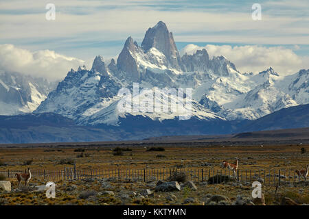 Mount Fitz Roy, Parque Nacional Los Glaciares (World Heritage Area), and guanacos jumping fence, Patagonia, Argentina, - Stock Photo