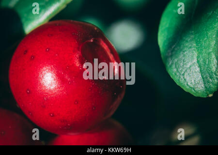 Lingonberry close-up - Stock Photo