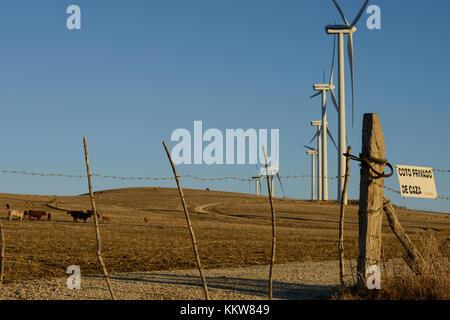 Spain, Andalusia, Cadiz, village La Zarzuela, cattle and wind farm - Stock Photo