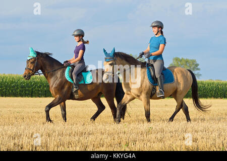 Two girl on back of German ponies riding walk in a stubble field - Stock Photo