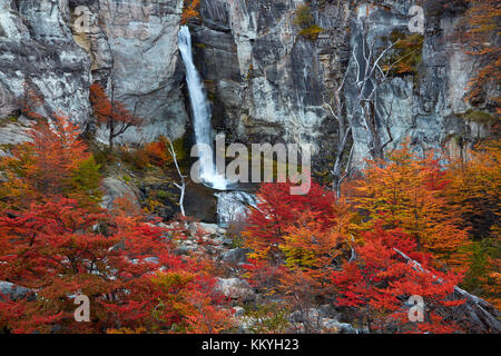 El Chorrillo Waterfall and lenga trees in autumn, near El Chalten, Parque Nacional Los Glaciares, Patagonia, Argentina, - Stock Photo