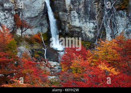 El Chorrillo Waterfall and lenga trees in autumn, near El Chalten, Parque Nacional Los Glaciares, Patagonia, Argentina, - Stock Photo
