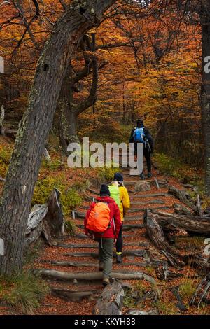 Hikers in lenga forest on track to Laguna de los Tres, Parque Nacional Los Glaciares (World Heritage Area), Patagonia, - Stock Photo