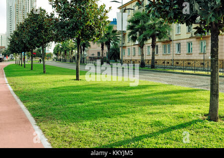 View of the beautiful green city street with lawn, palm trees, trees, bicycle road. - Stock Photo
