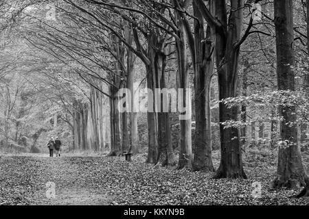 Avenues of deciduous trees in Autumn - Stock Photo