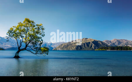 The famous tree of Wanaka Lake in Otago Region, New Zealand. - Stock Photo