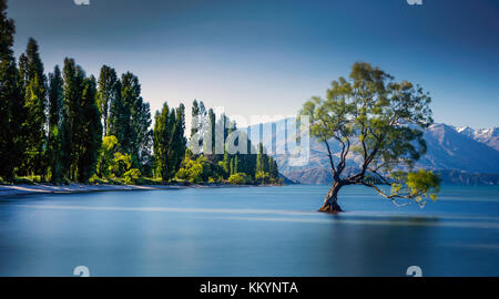 The famous Wanaka Tree at Lake Wanaka, Otago, New Zealand. - Stock Photo