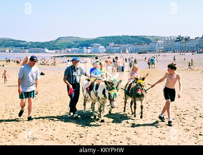 Llandudno seaside holiday resort. Traditional children donkey rides on sandy summer beach. Gwynedd, north Wales, - Stock Photo