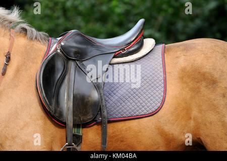 Leather saddle horse close up. - Stock Photo