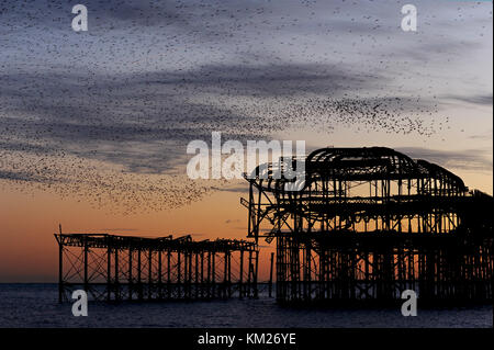 Murmuration over the ruins of Brighton's West Pier on the south coast of England. A flock of starlings performs aerial acrobatics at sunset.